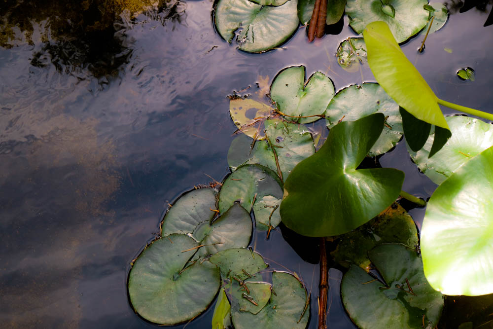 AndreaMai_lotus-1467