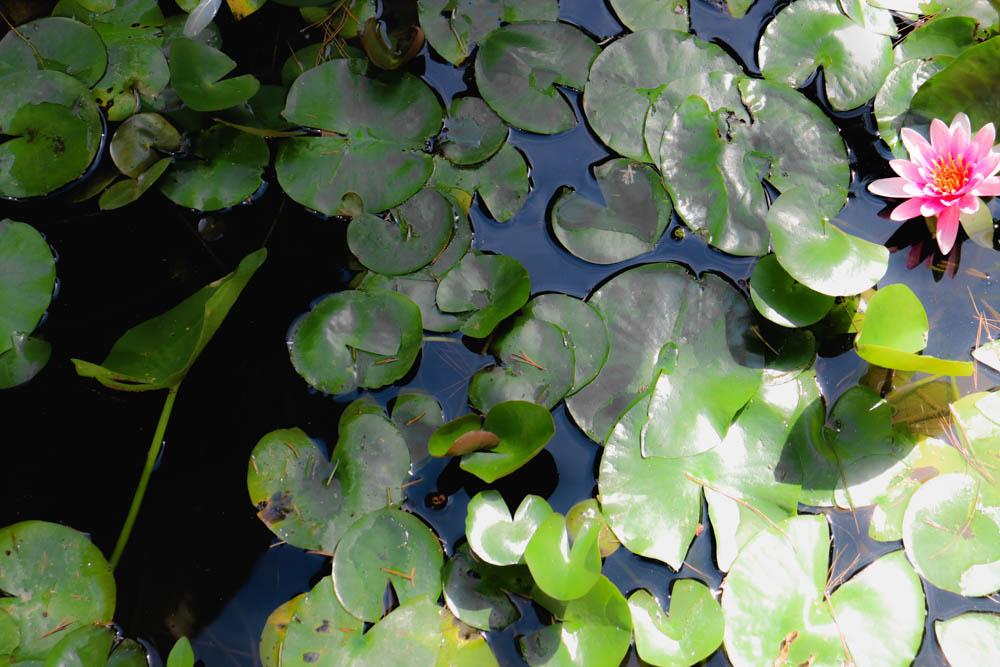 AndreaMai_lotus-1472