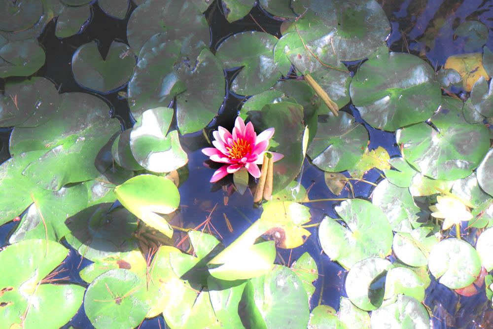 AndreaMai_lotus-1485