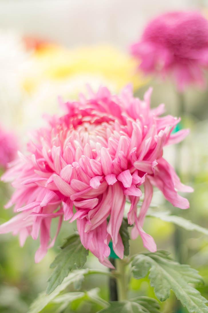 AndreaMai_Flowers-5649
