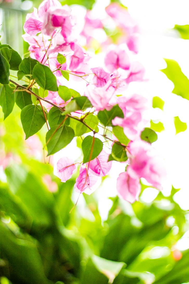 AndreaMai_Flowers-5682