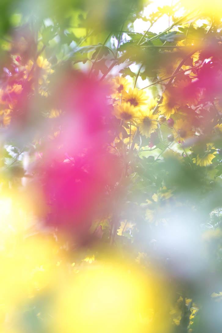 AndreaMai_Flowers-5703