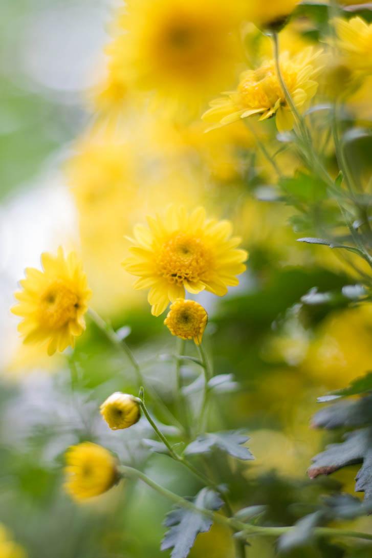 AndreaMai_Flowers-5707