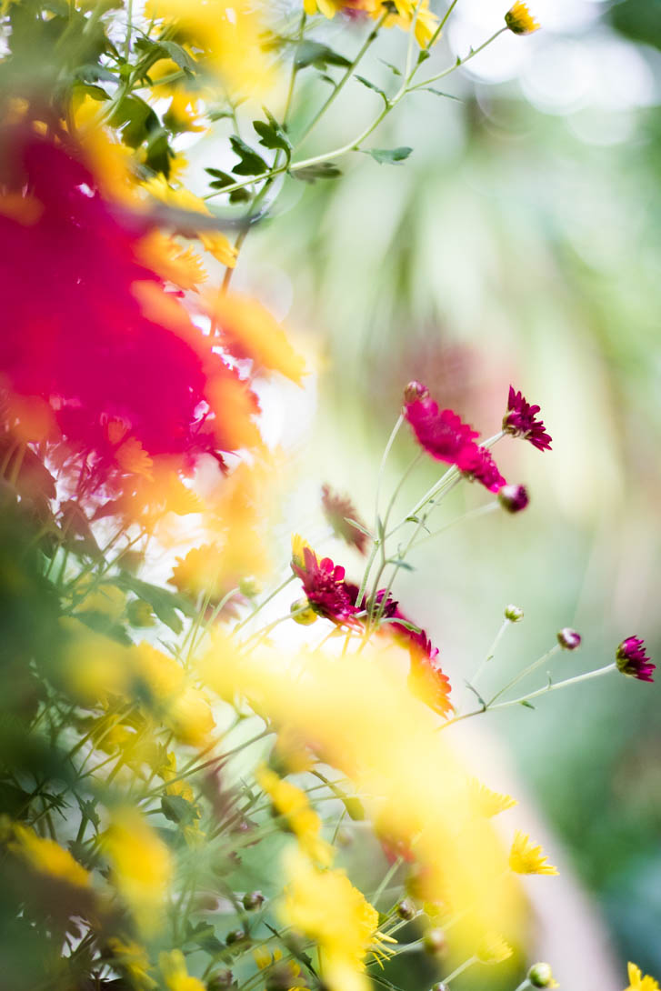 AndreaMai_Flowers-5720