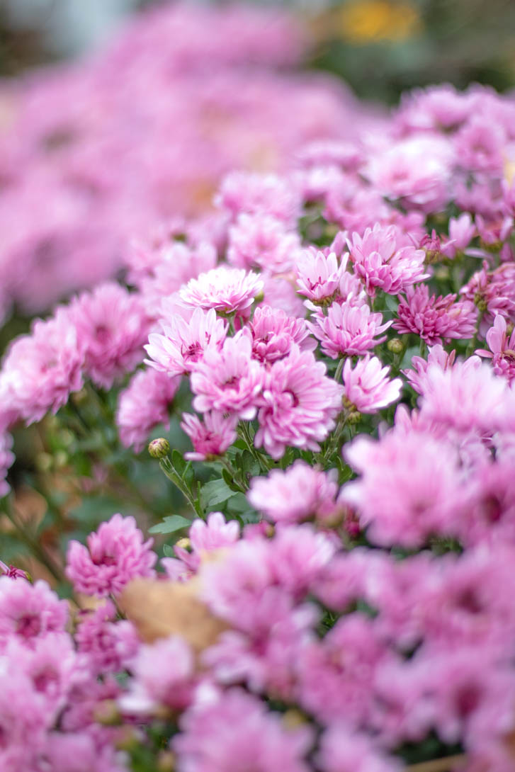 AndreaMai_Flowers-5744