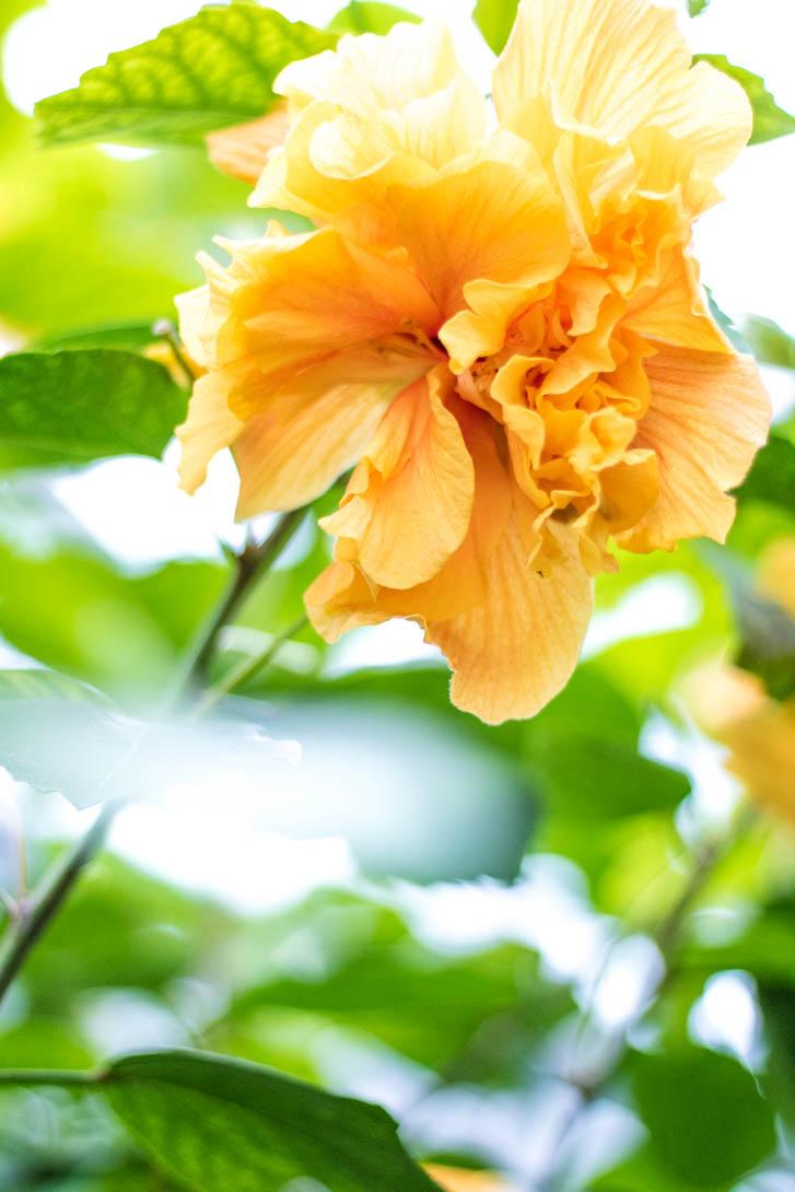 AndreaMai_Flowers-6291
