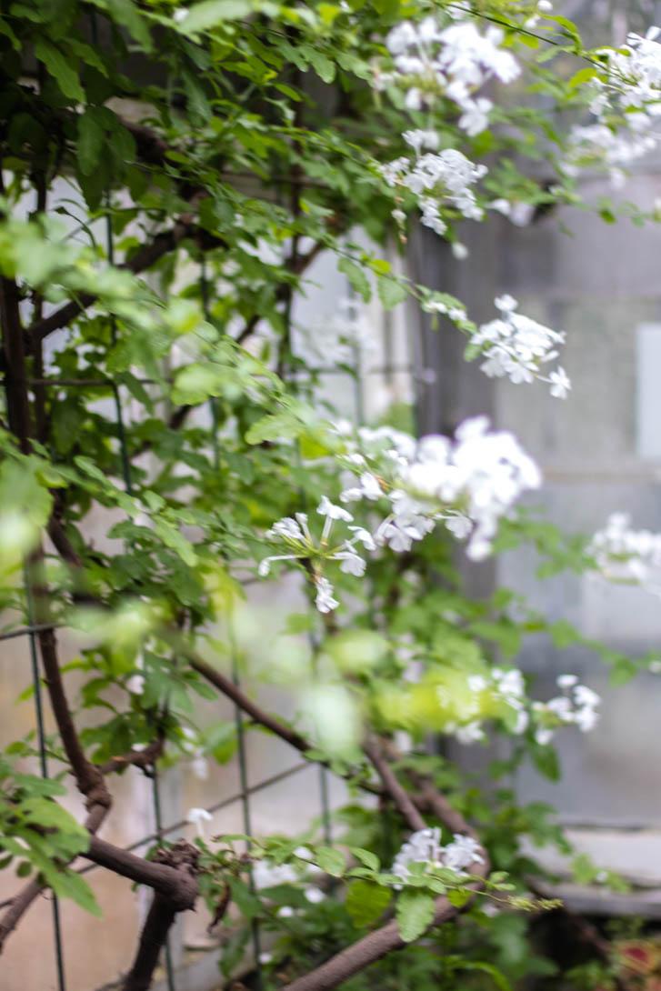 AndreaMai_Flowers-6295