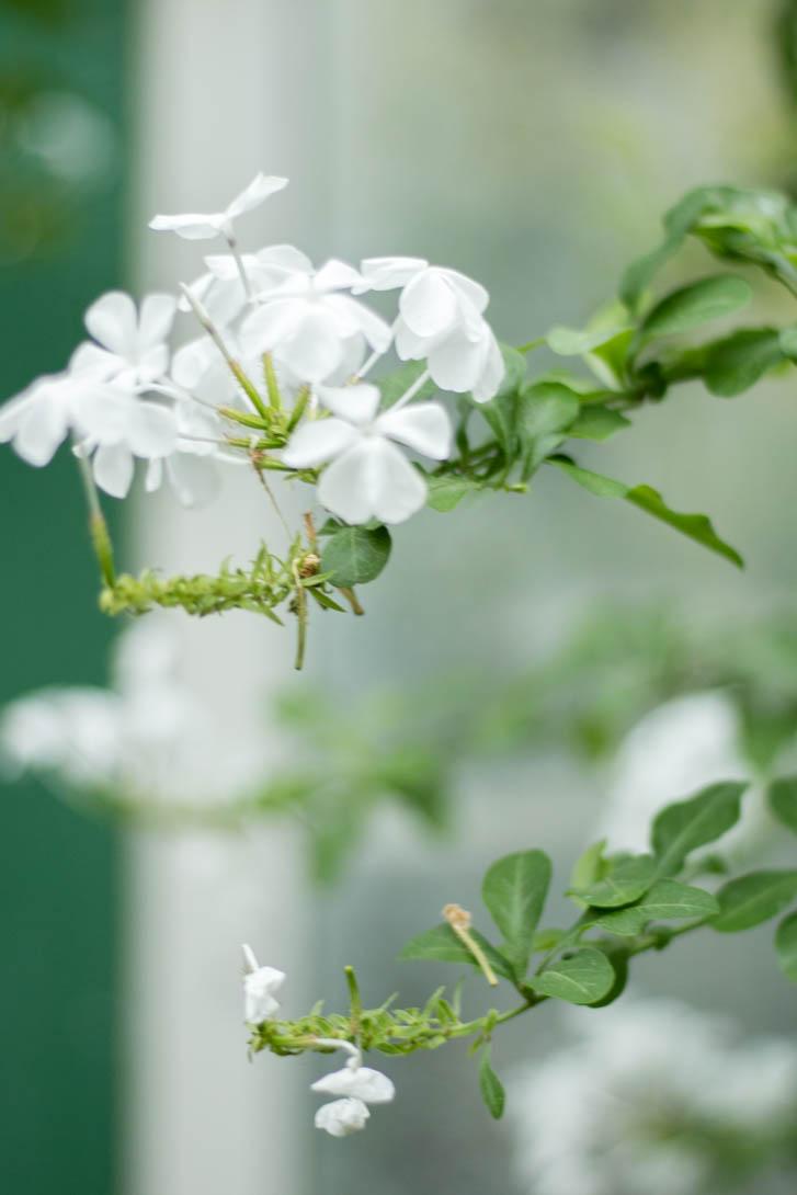 AndreaMai_Flowers-6307