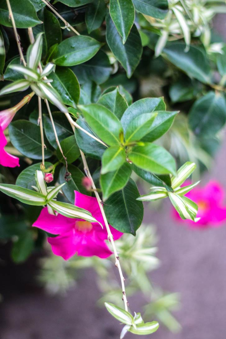 AndreaMai_Flowers-6326