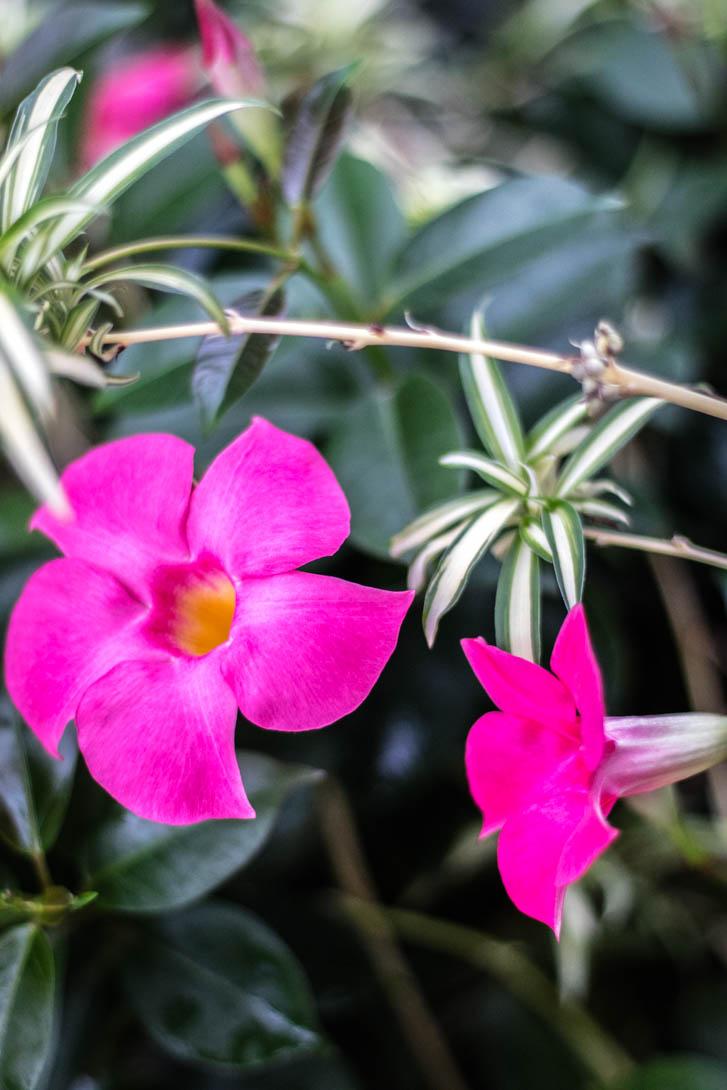 AndreaMai_Flowers-6328