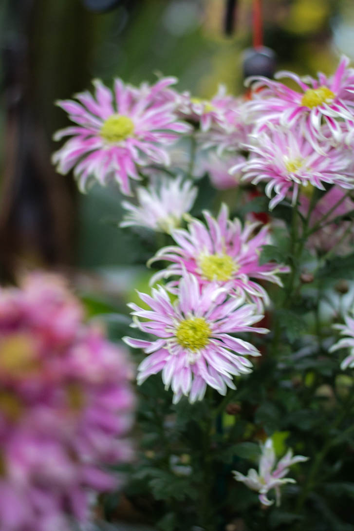 AndreaMai_Flowers-6339