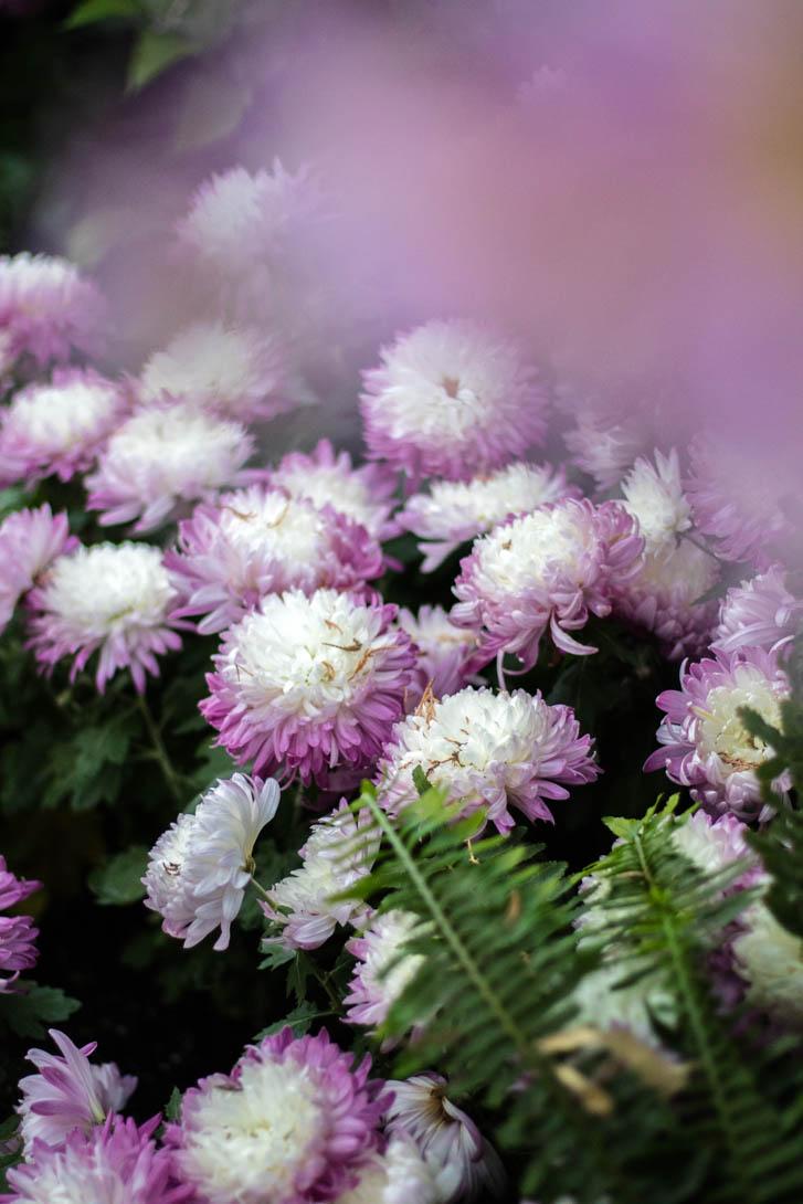 AndreaMai_Flowers-6371