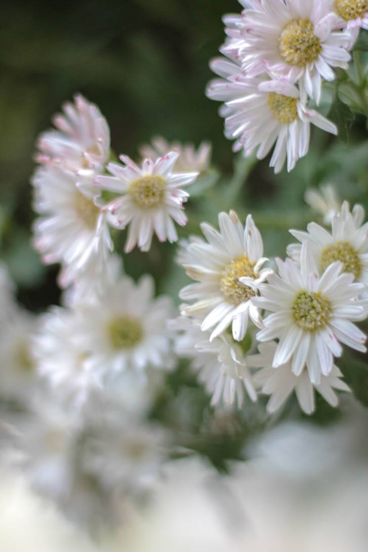 AndreaMai_Flowers-6374