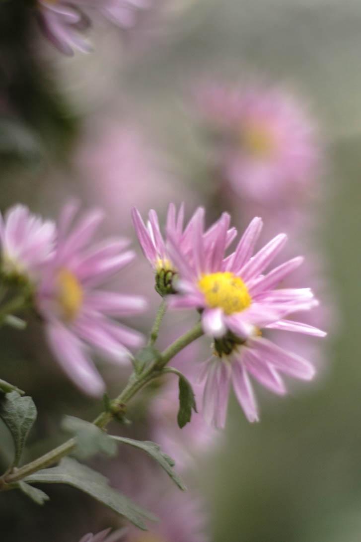 AndreaMai_Flowers-6382