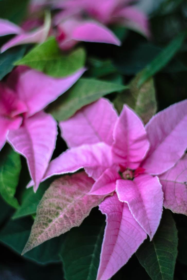 AndreaMai_Flowers-6396