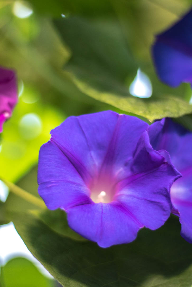 AndreaMai_Flowers-6401