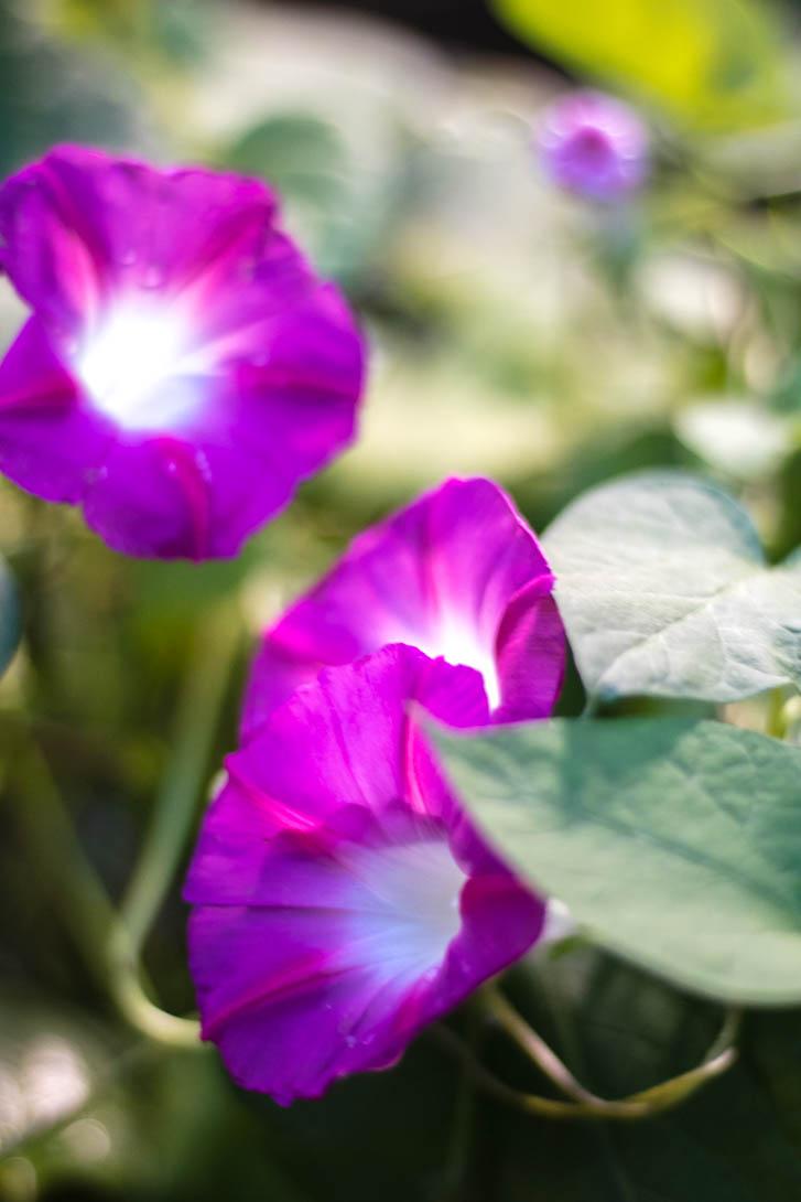 AndreaMai_Flowers-6407