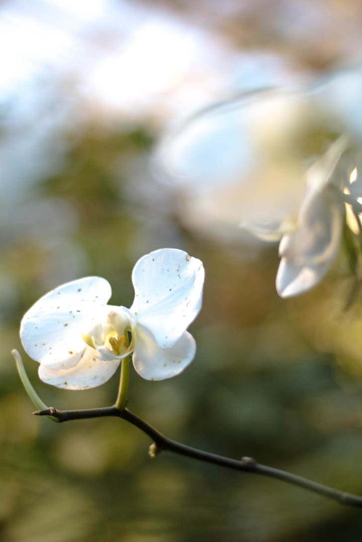 AndreaMai_Flowers-6423