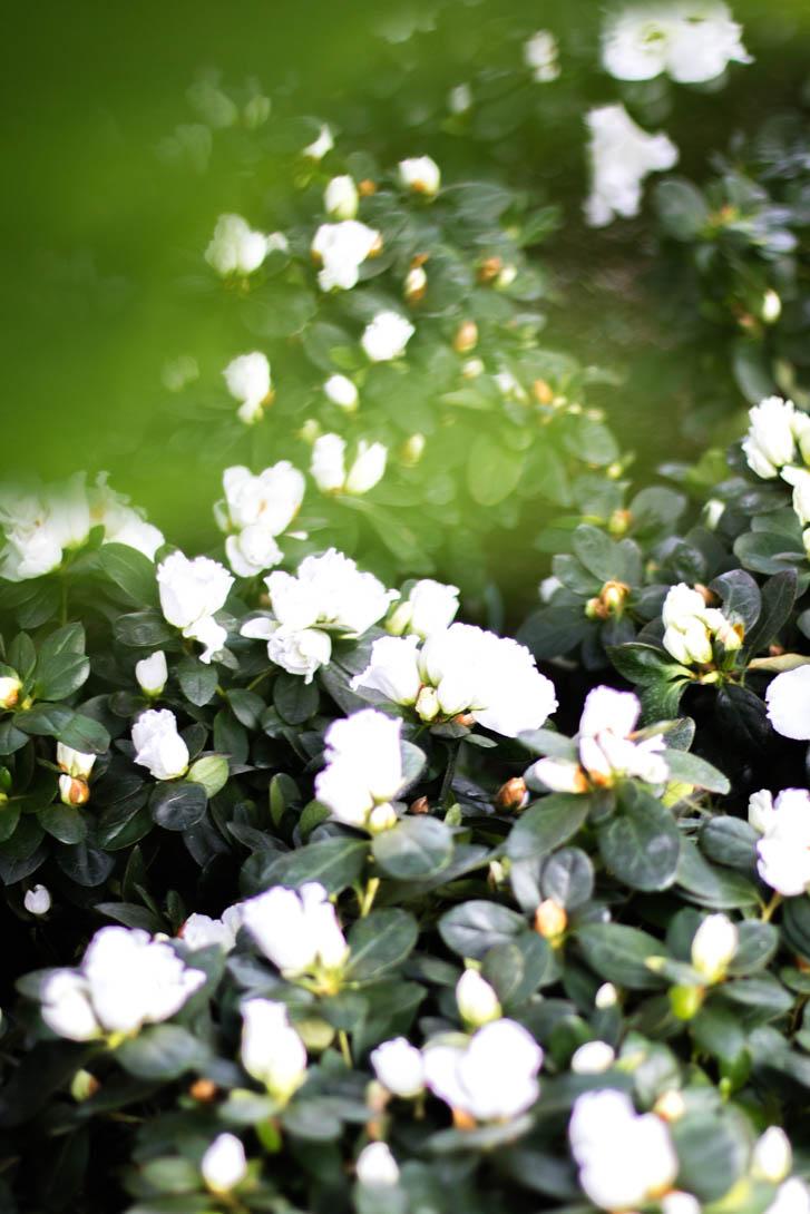 AndreaMai_garden-6950