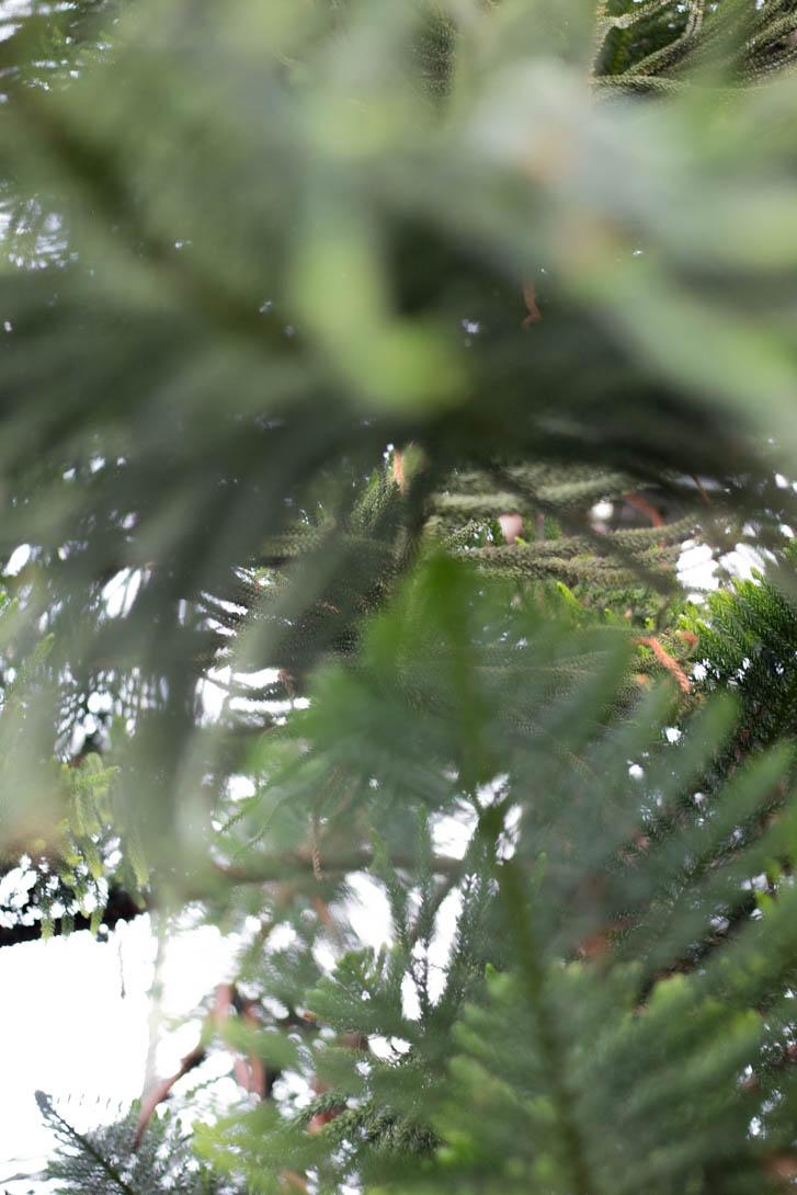 AndreaMai_garden-6953