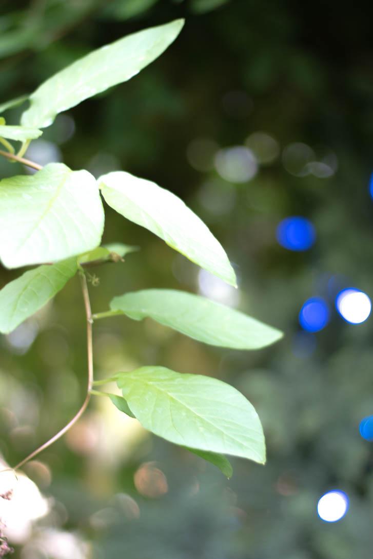AndreaMai_garden-6988