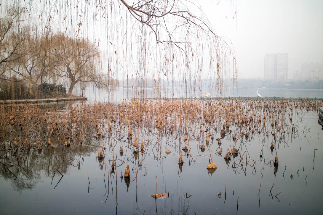 AndreaMai_Jinan-0029