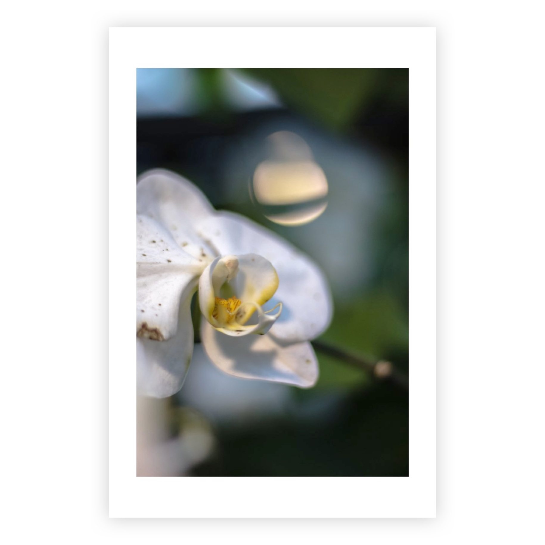 MYSTERIOUS ORCHID LIMITED EDITION PRINT