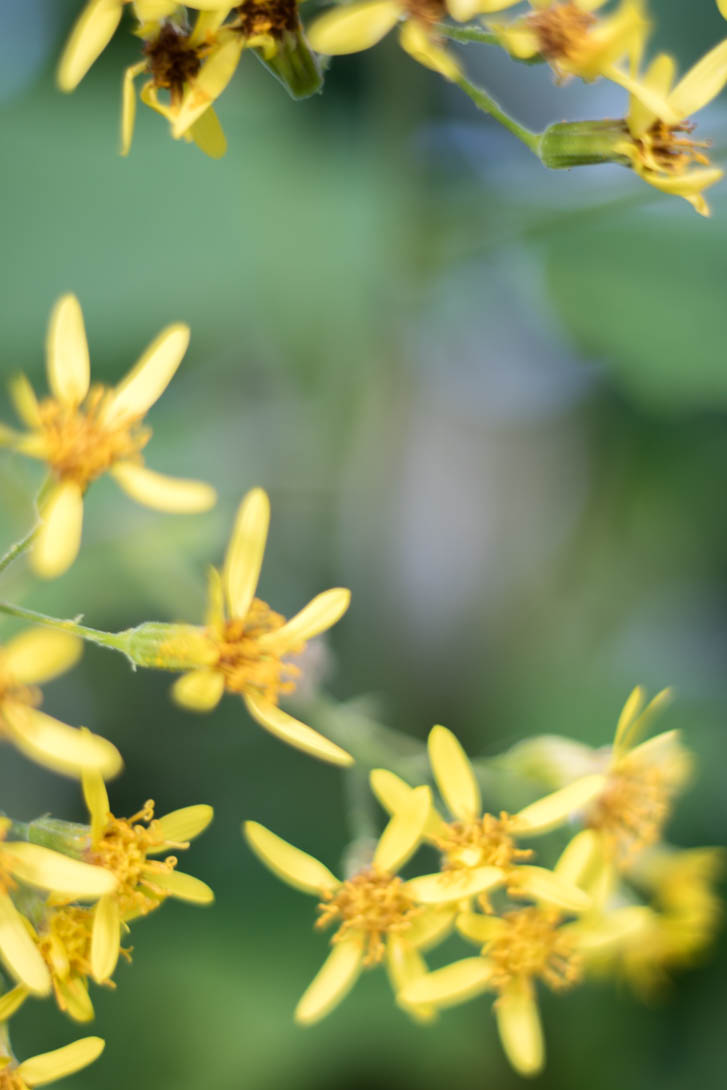 AndreaMai_Flowers-0879