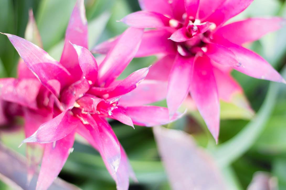 AndreaMai_Flowers-0931