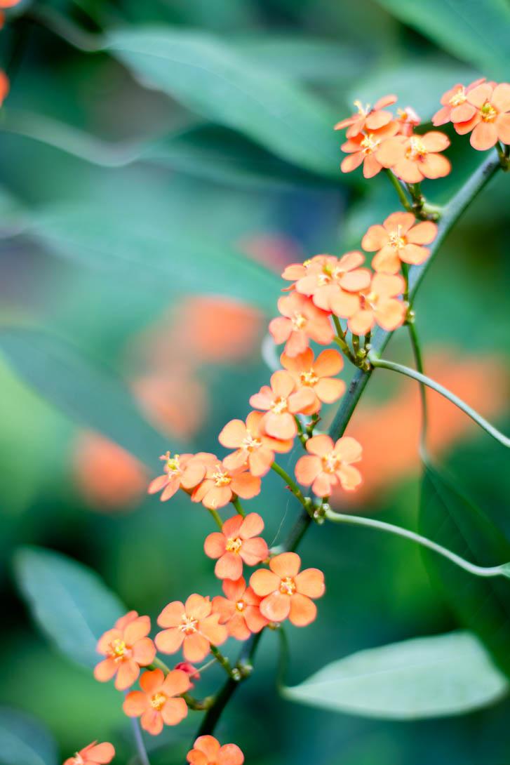 AndreaMai_Flowers-0968
