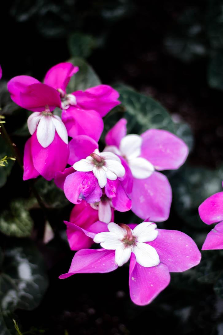 AndreaMai_Flowers-1159