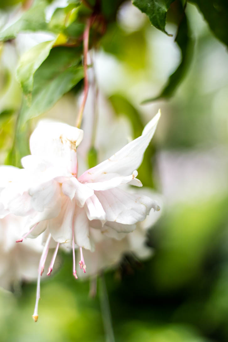 AndreaMai_Flowers-1437