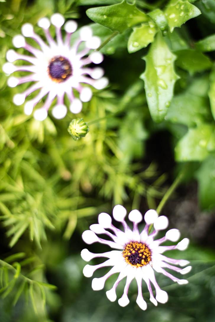 AndreaMai_Flowers-1649