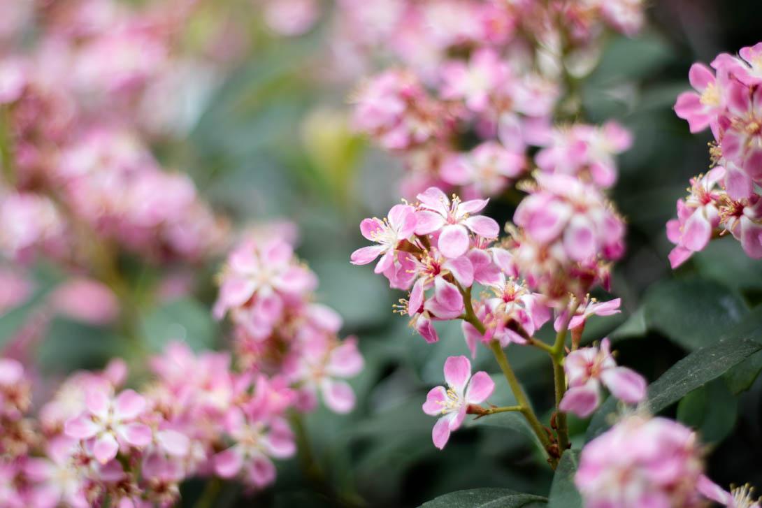 AndreaMai_Flowers-2097