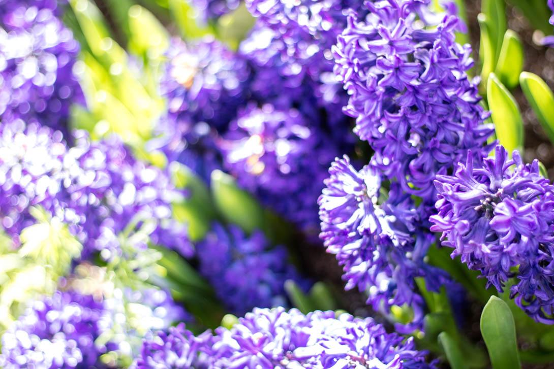 AndreaMai_Flowers-2359